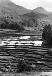 Chhattisgarh and Orissa