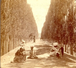 Baramulla Road with poplars - 1908