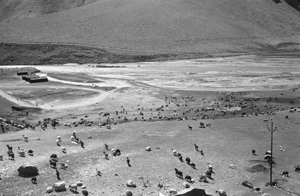 Highway - goats before Kargil